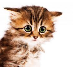 7 Interesting Ways Of Playing With Your New Kitten