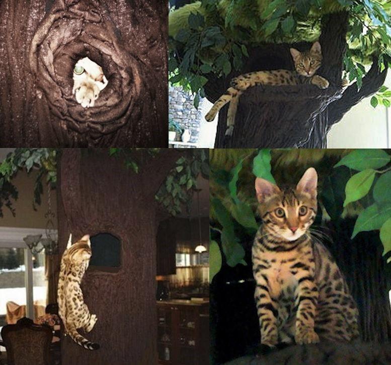 Extra Large Cat Furniture