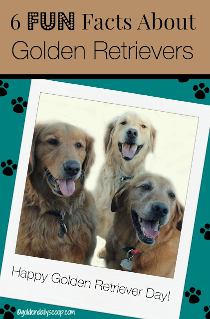 golden retriever day 6 fun facts about golden retrievers