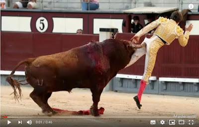 Momento da chifrada do touro no toureiro