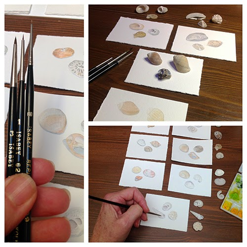 Collage of sea shell watercolor paintings
