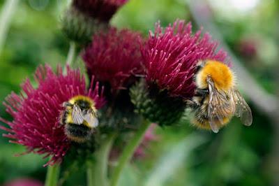 plants, flowers, bee, wildlife,