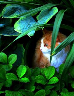 cats hiding from rain's water drop