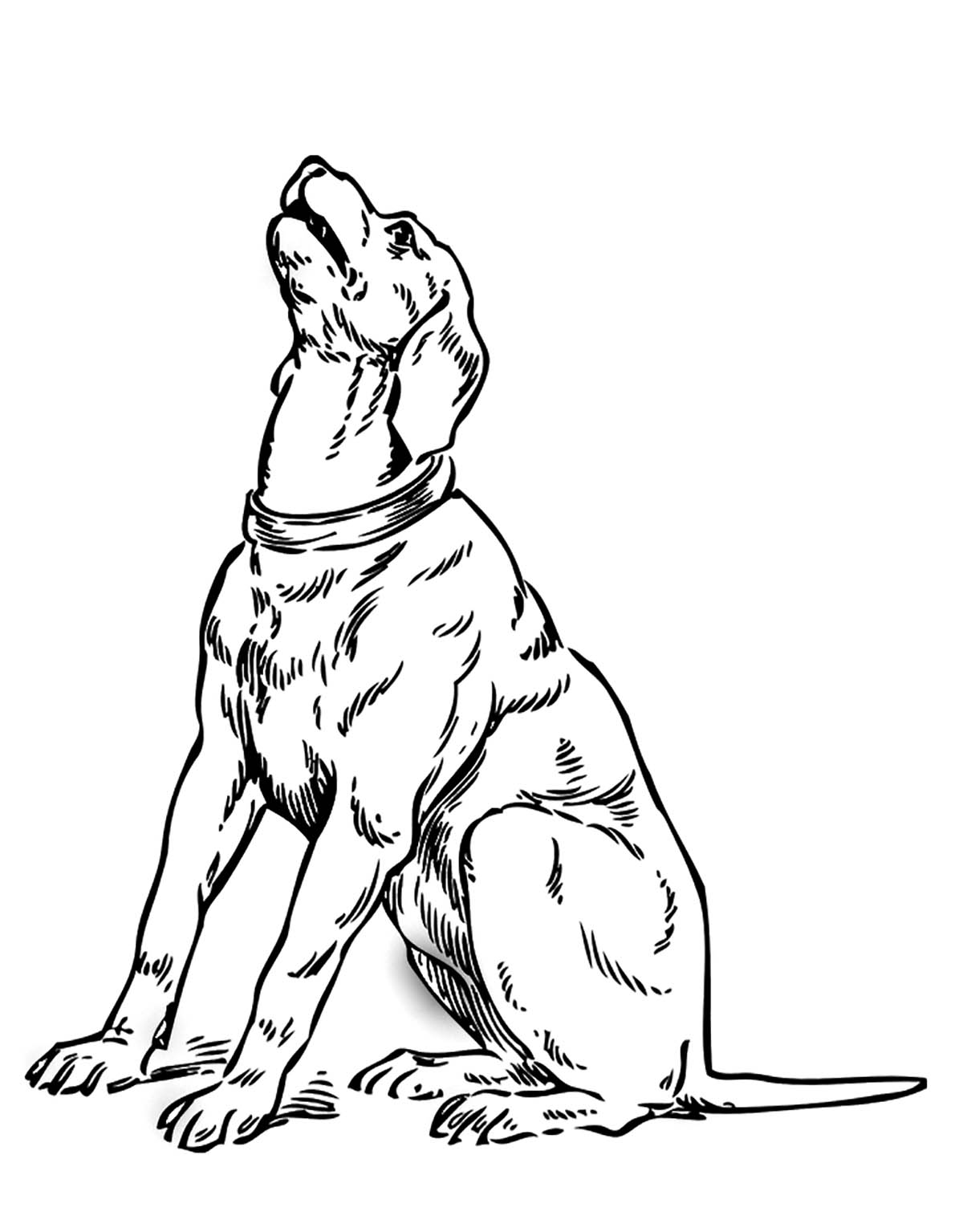 Dogs coloring pages 81
