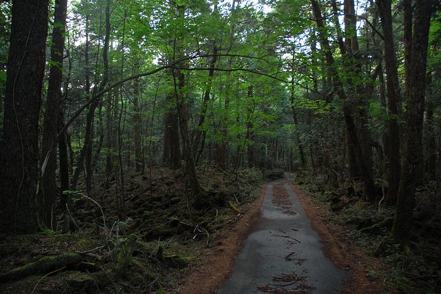 Jalan Menuju Hutan Aokigahara