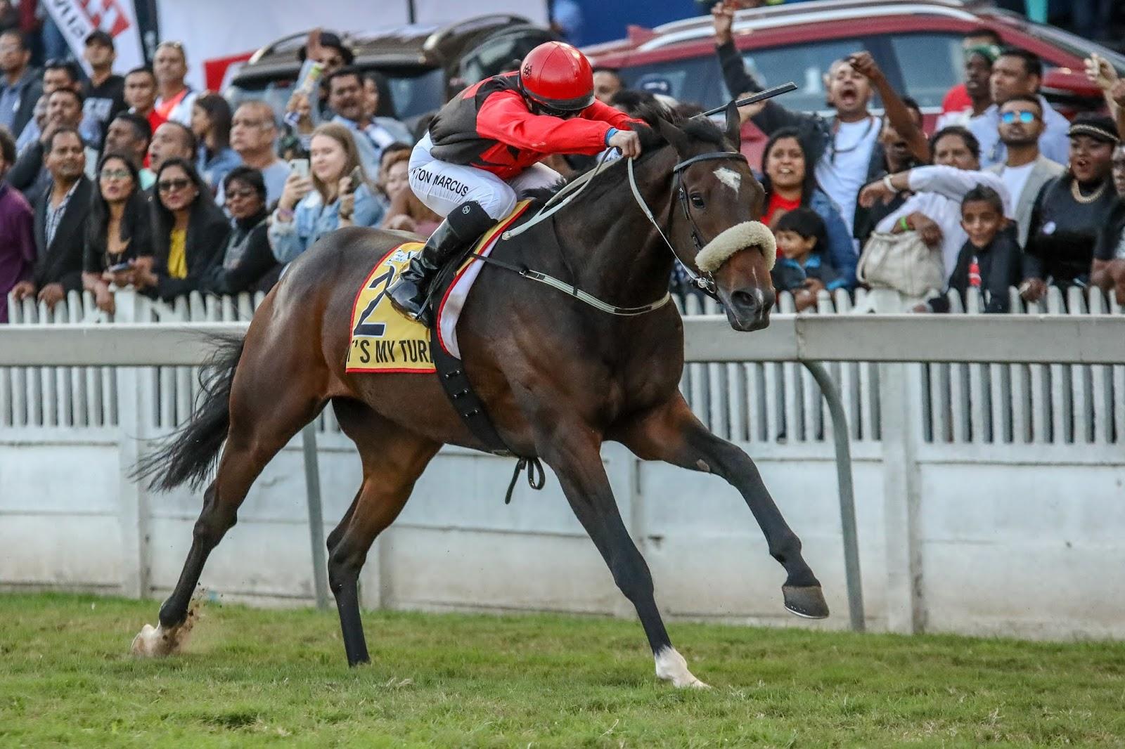 Vodacom Durban July 2020 Horse Profile - It's My Turn
