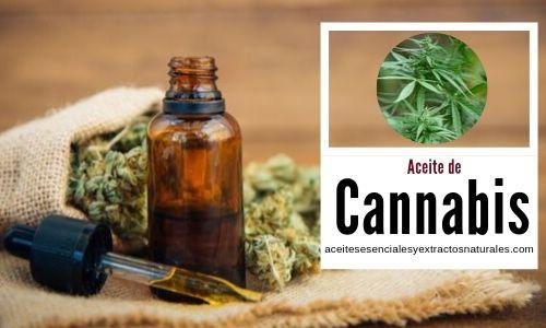 El aceite de Cannabis es un liquido espeso extraído de la planta por sus propiedades medicnales