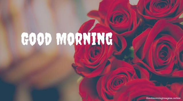 Good Morning Images In Roses 6
