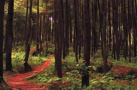 Pesona Taman Wisata Alam Gunung Pancar Sentul Bogor