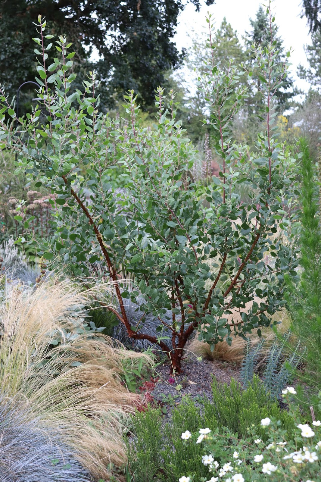 Plant Ideas For Low Water Gardening