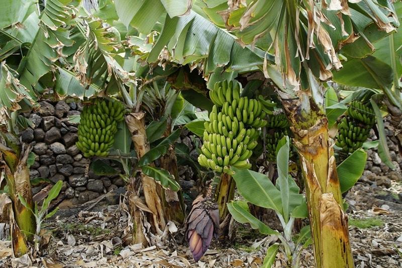ปลูกผลไม้ อาชีพเสริมเกษตร