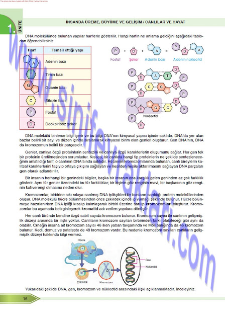 8. Sınıf Fen Bilimleri Öğün Yayınları Ders Kitabı Cevapları Sayfa 16
