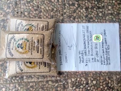 Benih padi yang dibeli   MUHABIL Bengkulu Tengah, Bengkulu.   (Sebelum packing karung).