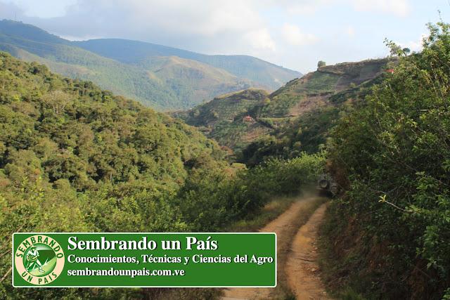 montañas de El Jarillo Venezuela