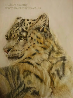 polychromos wild cat drawing