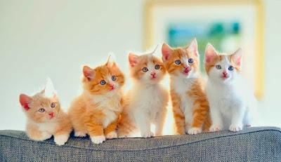 ما هي بعض الأنشطة المفضلة للقطط؟