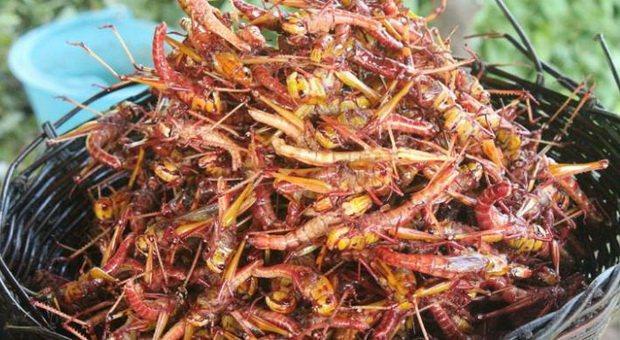 serangga goreng kamboja