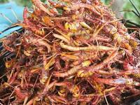 Serangga Goreng, Kuliner Ekstrem Khas Kamboja