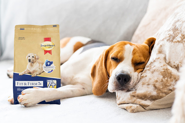 https://www.tops.co.th/th/household-and-pet/pet-care/dog-dry-food