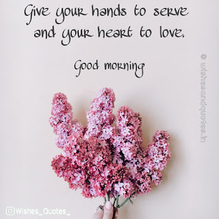 good-morning-flower-images-hd-wishesadnquotes.in