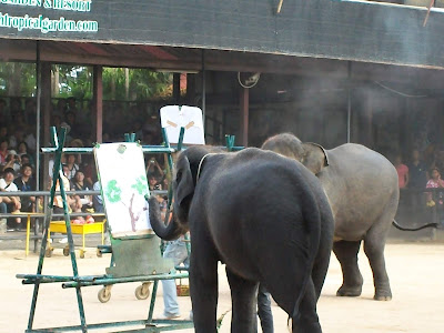 elephant-show-in-thailand