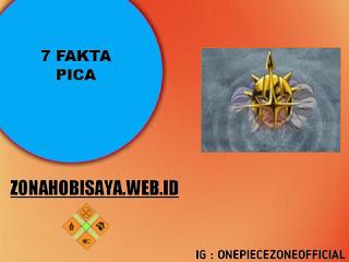 7 Fakta Pica One Piece, Seorang Ellite Officer Bajak Laut Donquixote [One Piece]