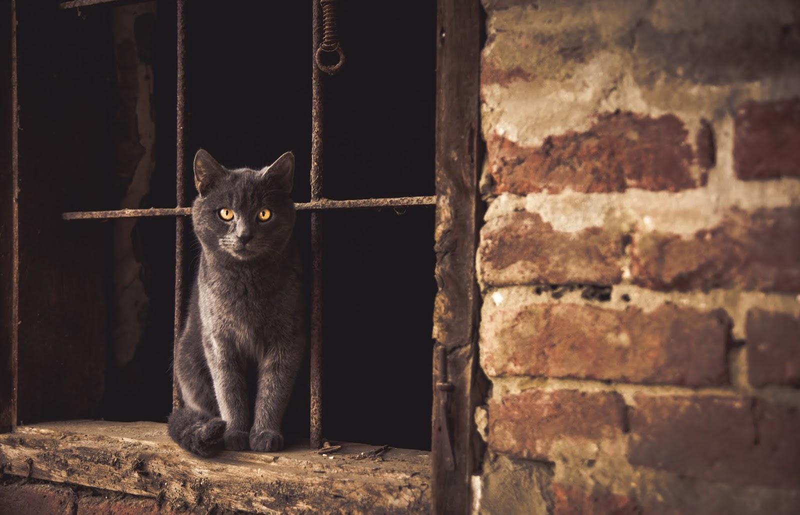 Russian cat sitting on window jamb,cat images