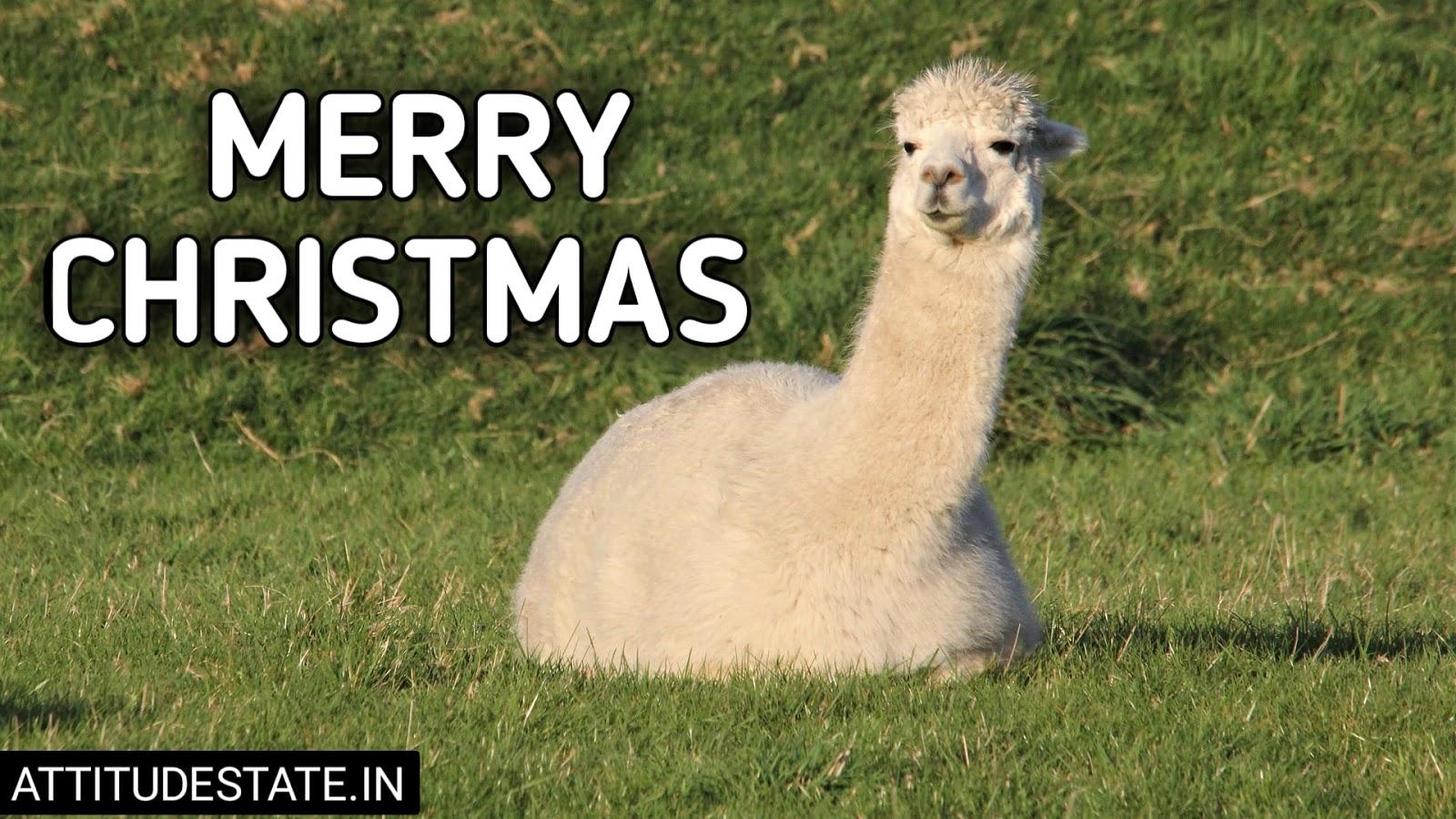 funny merry christmas posts