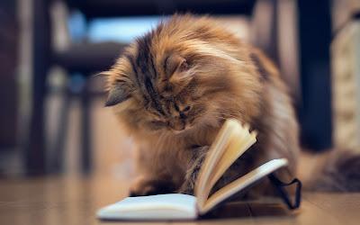 Mitos y cuentos de gatos