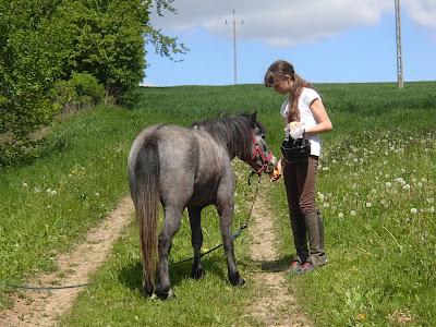 Konie, kucyki, jazda konna, azda w terenie, majowy spacer, kwitnący rzepak, impreza urodzinowa na świeżym powietrzu