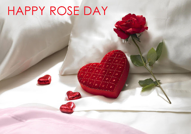 valentine rose day image