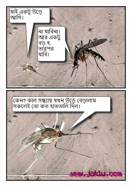 Day of a mosquito Bengali joke