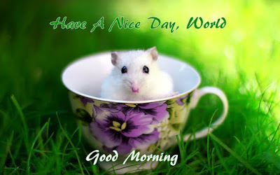 Latest Good Morning wishing hd wallpaper images