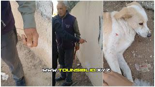 ( بالفيديو )راجل كبير يعتدي على فتاة بضرب ب(هرواة) و يحاول خنقها بواسطة( تل) بسبب تصويره و هو يقوم بتعذيب كلب؟