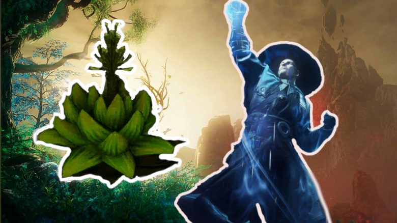 """New World: How to find the flower cap for potions and the quest """"Weakness of the ego"""""""