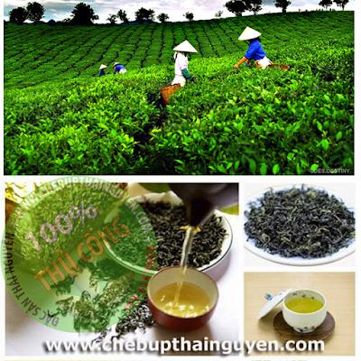 Giải thưởng danh giá mà chè Thái Nguyên nhận được như một sự khẳng định chất lượng sản phẩm chè Thái Nguyên