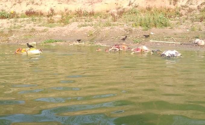 கங்கை ஆற்றில் மிதந்து வரும் கொரோனா பிணங்கள்! பிகார் - உத்தர பிரதேச அவலங்கள்