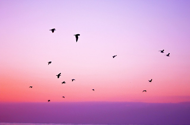 birds flying over purple pink sunset sky