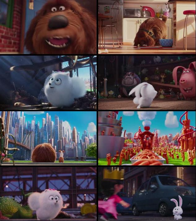 The Secret Life of Pets 2016 English 720p HDRip