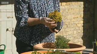 Gardeners' World Orange Thyme