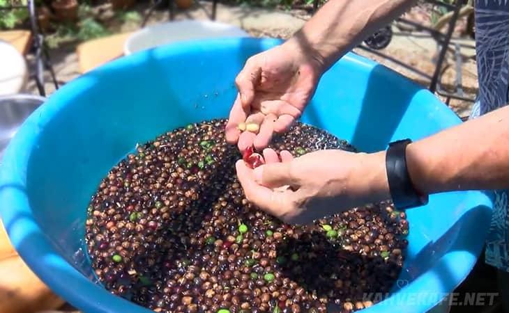 türkiye'de kahve yetişiyor mu, türkiye'de kahve yetişen yerler, türkiye'de kahve hangi bölgede yetişir - www.kahvekafe.net