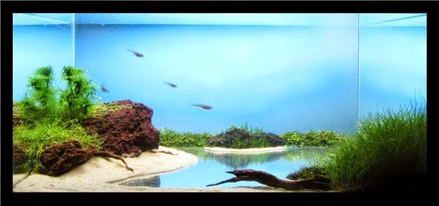 Hồ thủy sinh hiệu ứng ao - nhìn trực diện