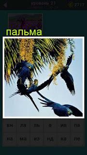 в ветках пальмы летают птицы ответ на 21 уровень в игре 667 слов