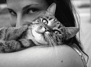 Gato abrazado