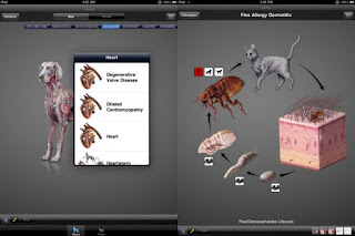 iDIA - Diagnostic Imaging Atlas, Small Animal