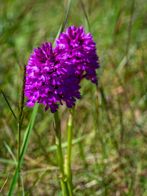 Photo of wild orchids