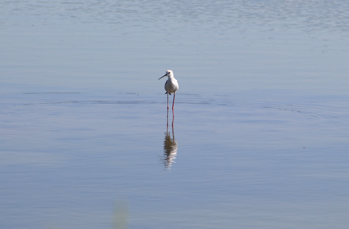 Vogelbeobachtung in den Salinen, Hyeres
