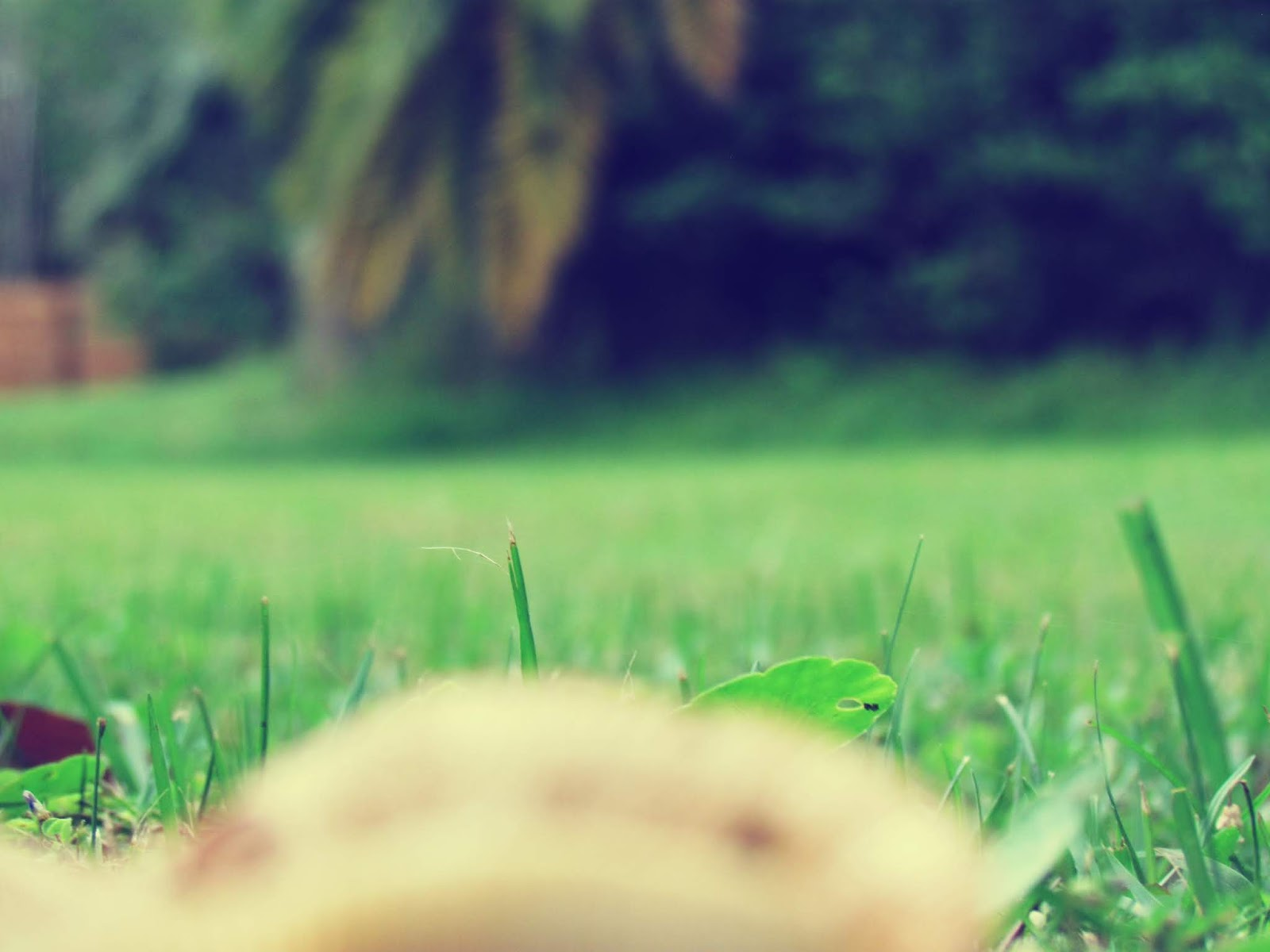 Sunny, Tropical Florida Backyard With Growing Mushroom Fungus