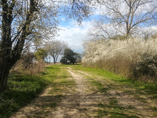 Rushden and Wallington bridleway 24