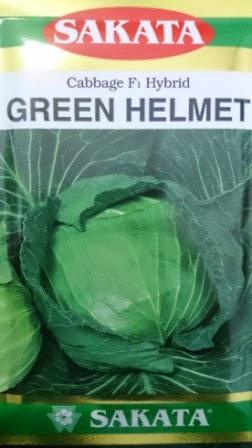 crop keras,tahan simpan,tahan pecah, tahan busuk hitam, cepat panen, Green Helmet, Sakata, Benih, Bibit, Kubis, Kubis Green Helmet